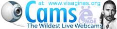 cams.visaginas.org